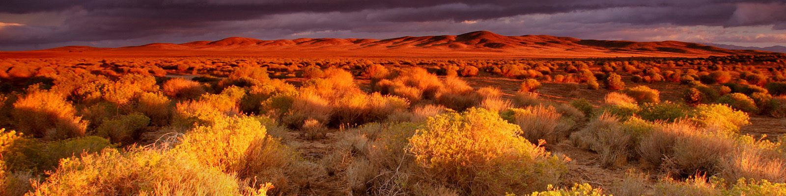 antelope valley bankruptcy in the desert